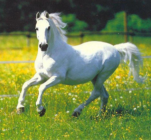honestly, though, if I had this horse I'd probably call him