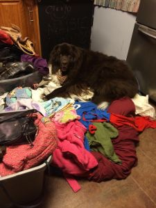 laundry FAIL. Piles in the kitchen, with one of my Newfoundland dogs comfortably sleeping on them.